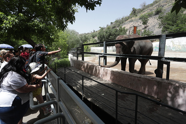 Events dedicated to the International Day for Protection of Children took place in Yerevan Zoo - Photolure News Agency
